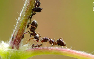 Las Hormigas y tus Finanzas
